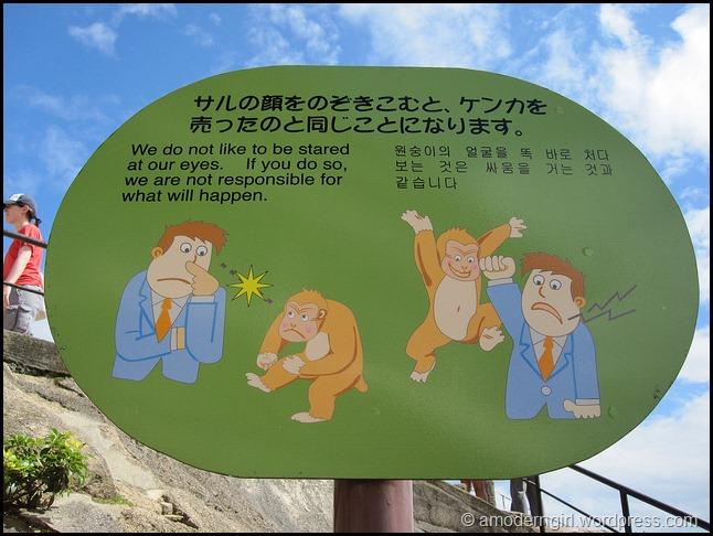 Miyajima Monkey Tip #3