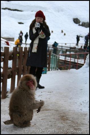 snowmonkey07