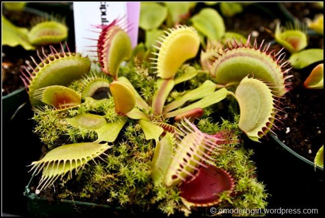 plantsale5