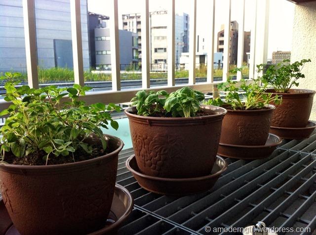 Herb Garden: Week 1