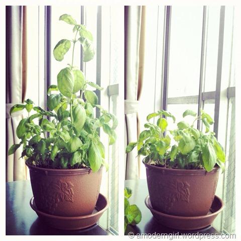 Herb Garden: Week 7