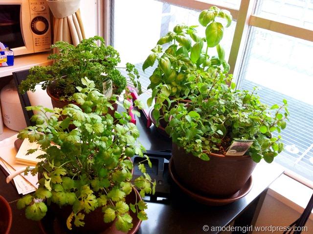 Herb Garden: Week 4