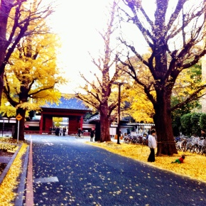 Late autumn colors, The University of Tokyo